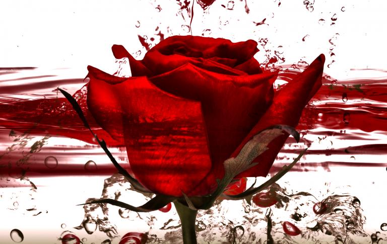 Informe d'un crim: el cas Sant Jordi.